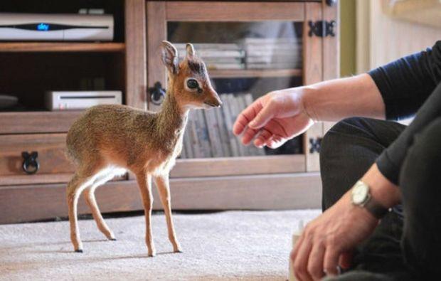 the_cutest_mini_animal_around_640_02