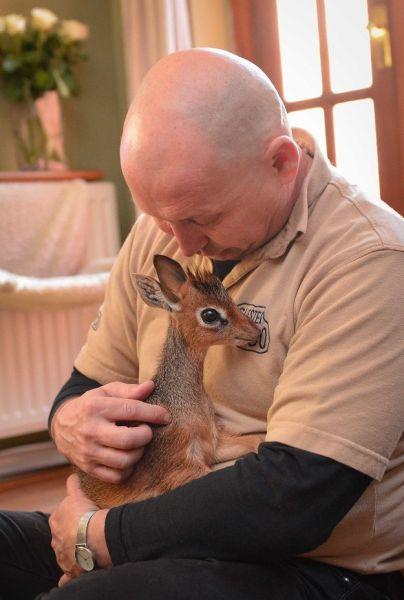 the_cutest_mini_animal_around_640_10